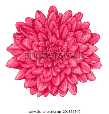 beautiful pink dahlia with the effect of a watercolor drawing isolated on white background. - stock vector