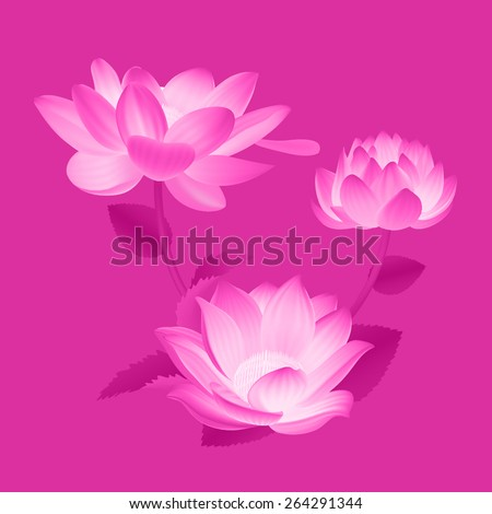 Beautiful Pink Flowers, Ideal For Spring Season