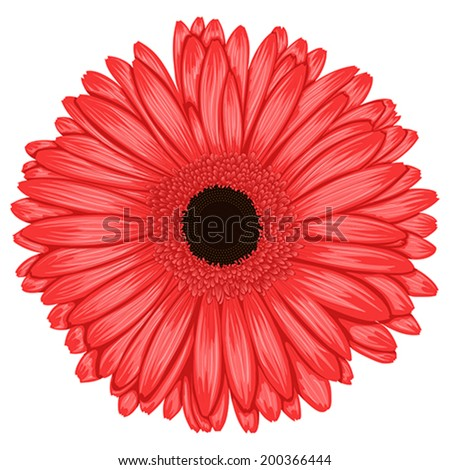 Beautiful pink gerbera isolated on white background . Hand-drawn with effect of drawing in watercolor - stock vector