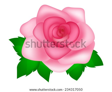 Beautiful pink rose with leaves illustration isolated on white background - stock vector