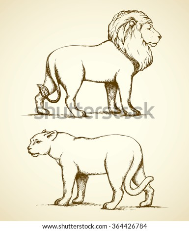 Beautiful proud powerful nobility big leo standing and fierce looking for prey in safari. Freehand ink drawn background sketchy in art scribble style pen on paper. Side view with space for text - stock vector