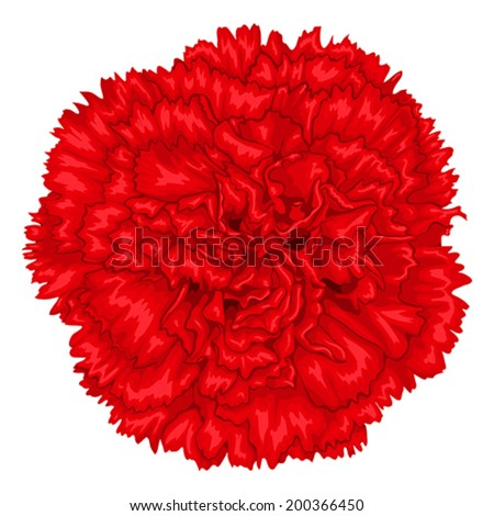 Beautiful red carnation isolated on white background. Hand-drawn with effect of drawing in watercolor - stock vector