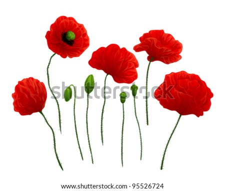 Beautiful red poppies on white background