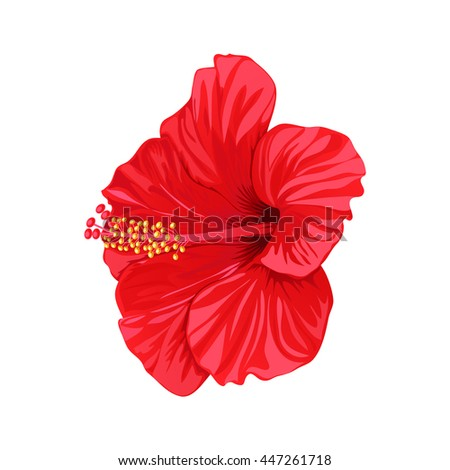 Beautiful red tropical hibiscus flower on white background. Element for your design.