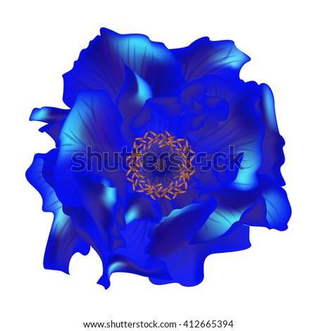 Beautiful Rose flower isolated on white background. Vector illustration. EPS 10 - stock vector