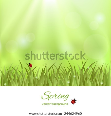 Beautiful spring illustration  with green grass and ladybird - stock vector