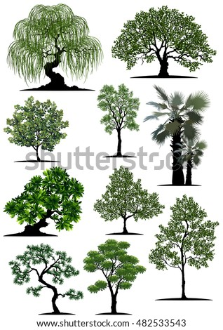 Beautiful tree on a white background,Isolated vector tree,Isometric trees in vector,tree with a realistic, Tree branch with green leaves over white background.Vector graphics. Artwork design element.