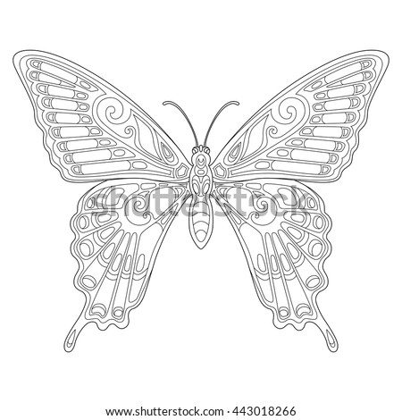Beautiful Tropical Butterfly Page Of Coloring Book For Adults And Children Art Therapy