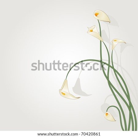 Beautiful tropical lillies