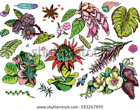 Beautiful Tropical Plants Collection (Colorful Vector EPS10 Doodles) - stock vector