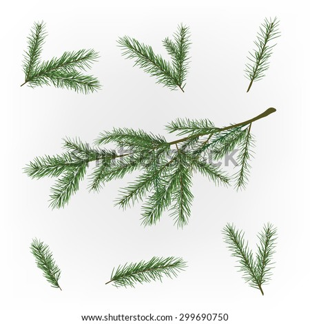 Beautiful vector illustration of christmas tree branches. Decorative elements for the New Year and Christmas postcards, posters and invitations. - stock vector