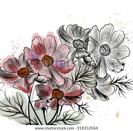 Beautiful vector illustration with cosmos flowers in engraved style - stock vector