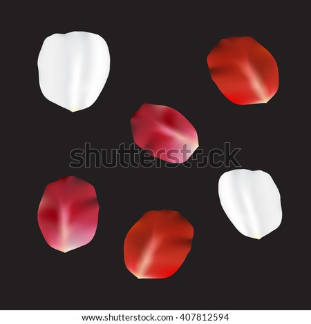 Beautiful vector set of red dark pink and white rose flower petal. Six big realistic petals isolated on black background. Spring summer flowers rose petal concept. Tender romantic elements for design. - stock vector
