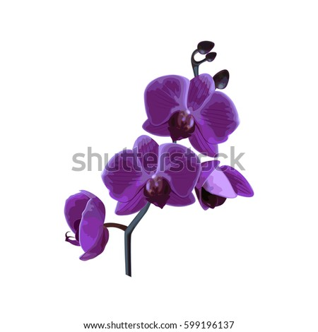 Beautiful violet tropical orchids flower on white background. Element for your design. Vector illustration.