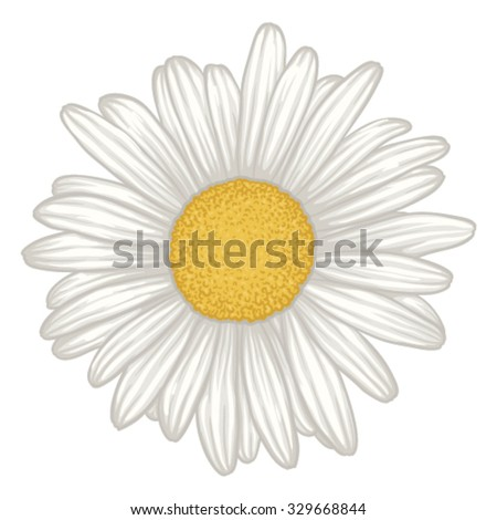 beautiful white daisy flower isolated. for greeting cards and invitations of wedding, birthday, mother's day and other seasonal holiday - stock vector