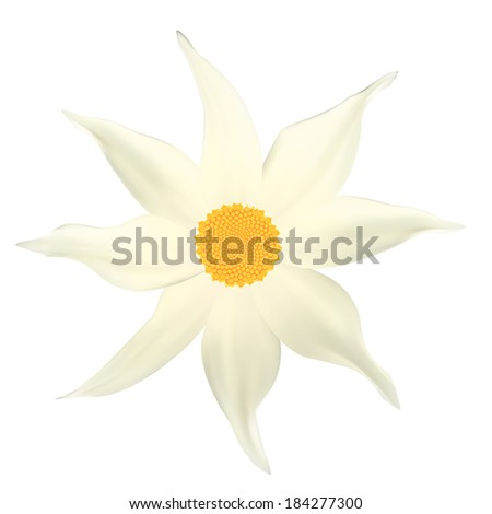Beautiful white flower. Isolated on white. Vector illustration  - stock vector