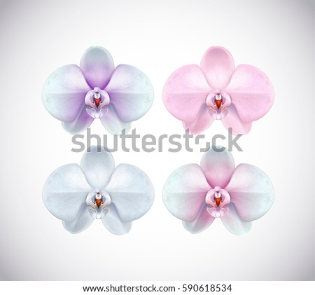Beautiful white, pink, purple and blue Orchid set flower closeup isolated on background. Collection