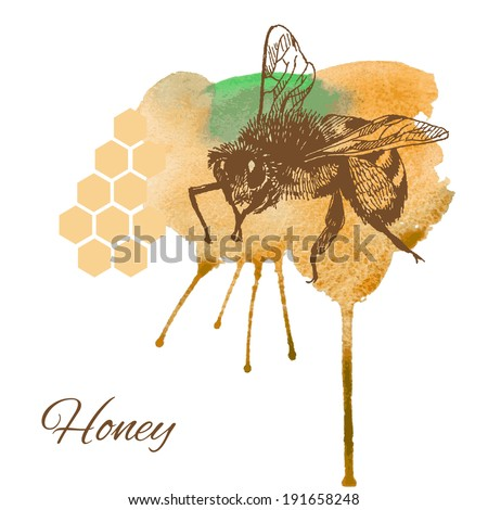 Bee and honey card. Hand drawn vector illustration. - stock vector