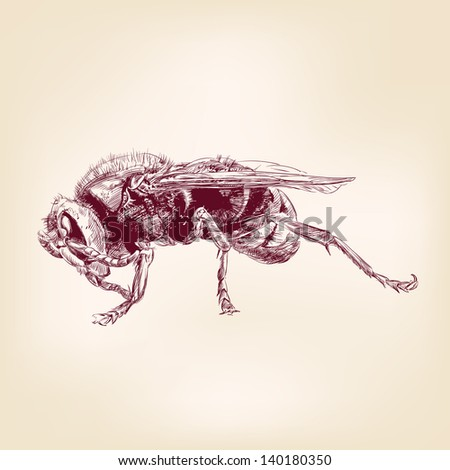 bee insect, hornet hand drawn vector llustration - stock vector