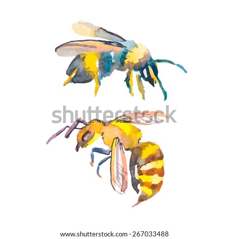 Bee isolated on white background. Bee watercolor. Vector. Wasp. - stock vector