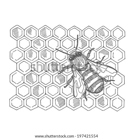 bee with honey, vector hand drawing - stock vector
