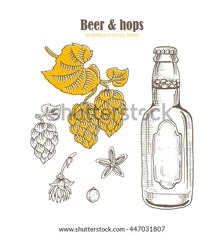Beer bottle and branch of hops with cones in a woodcut style. Vector illustration.