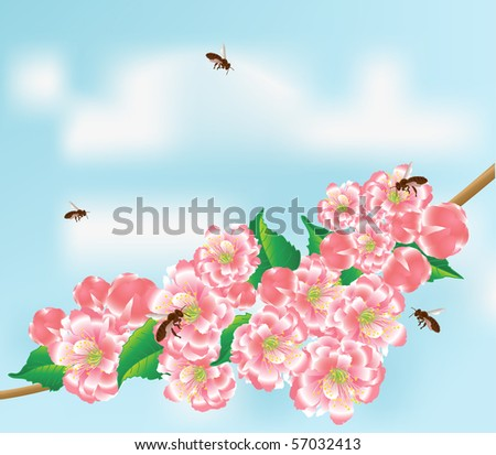 Bees fly to the flowering branch