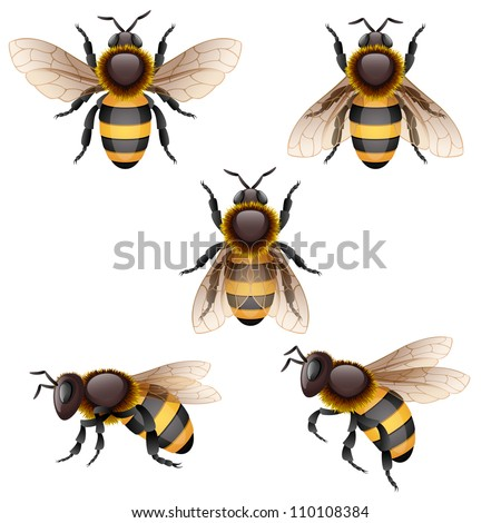 bees on white, EPS 10