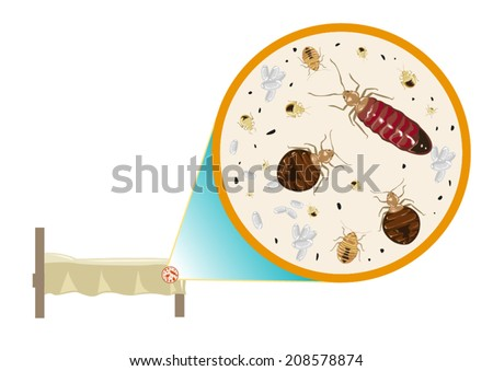 Beg Bugs under bed zoomed in. Vector EPS10 - stock vector