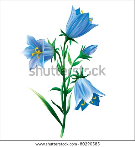 Bell flower vector illustration