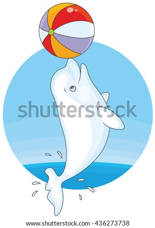 Beluga whale playing with a big colorful ball