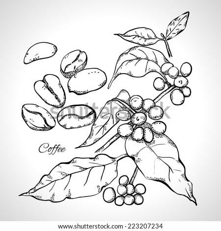 Berries, leaves, shoots and grains of coffee - monochrome drawing, line art. - stock vector