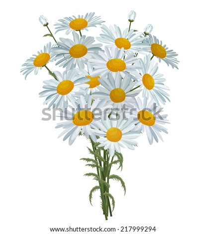 Big bunch of white realistic daisies isolated  - stock vector