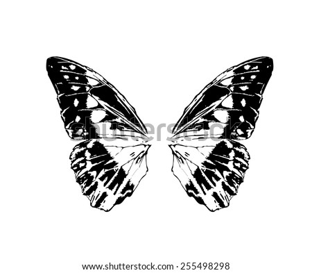 Big butterfly wings isolated vector in tattoo style  - stock vector
