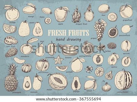 Big collection of fruits on blue background. Vector  illustration for your design - stock vector