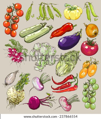 Big collection of hand-drawn vegetables, vector illustration in vintage style. Realistic image. - stock vector