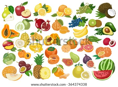 Big collection of isolated fruits on white background. Vector  illustration for your design - stock vector