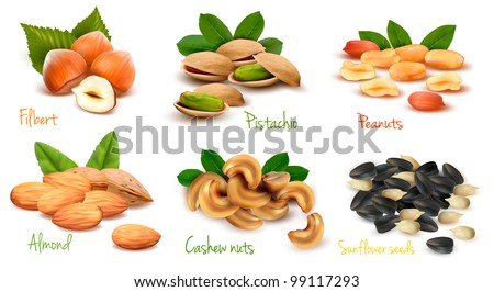 Big collection of ripe nuts and seeds. Vector