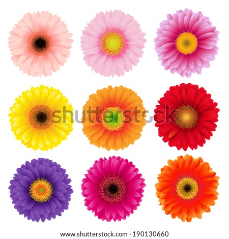 Big Colorful Gerbers Flowers Set, Vector Illustration - stock vector