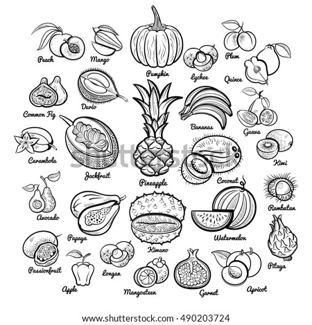 Big fruits collection. Pineapple, bananas, pumpkin, mango, passion, papaya, apple, melon, avocado, fig, kiwi, apricot, garnet, peach, plum, lychee and oth. Outline isolated sketch vector illustration
