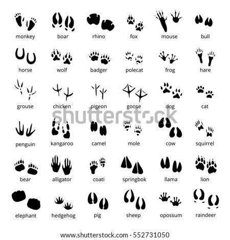 Search Vectors in addition Skull outline also Search Vectors likewise Skull cowboy as well Weisser Hai Mit Pilotfischen. on deer head blue