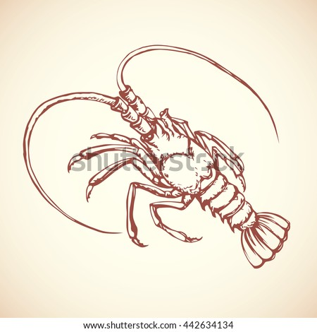 Big old red anthropod panulirus mudbug isolated on white background. Freehand outline ink hand drawn picture logo sketchy in art scribble retro style pen on paper. Closeup view with space for text - stock vector