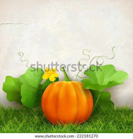 Big orange pumpkin,  leaves, grass against the background of a plaster wall - stock vector