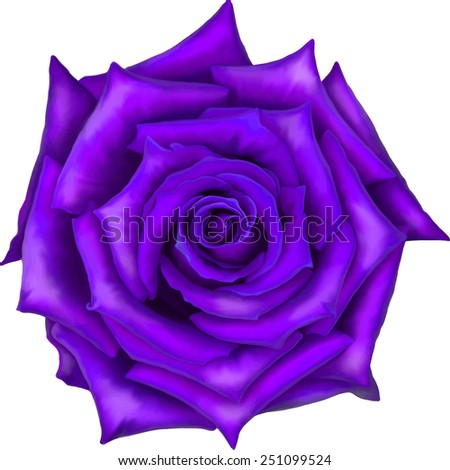 Big purple rose flower front view isolated on white background. - stock vector
