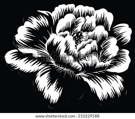 Big rose single white with black background. - stock vector