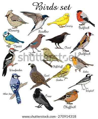 big set birds. birds flying, animals, bird silhouette, bird vector, crow, BlueJay, Canary, Woodpecker, Robin, Chiffchaff, Swallow,   chaffinch,  bullfinch,  waxwing, titmouse,  goldfinch, jay - stock vector