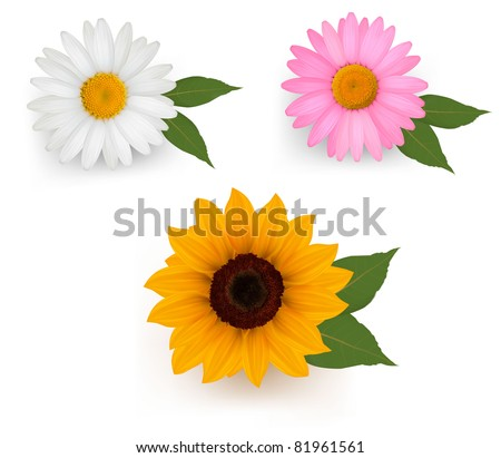 Big set of a beautiful colorful flowers. Vector illustration. - stock vector
