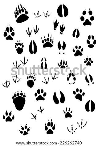 Big set of animal footprints include mammals and birds - stock vector