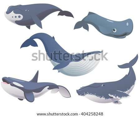 Big set of cartoon cute and funny whales, sea animals set, sea creatures collection, cartoon animals set, vector illustration of blue whale, killer whale, sperm whale, bowhead whale and humpback whale - stock vector