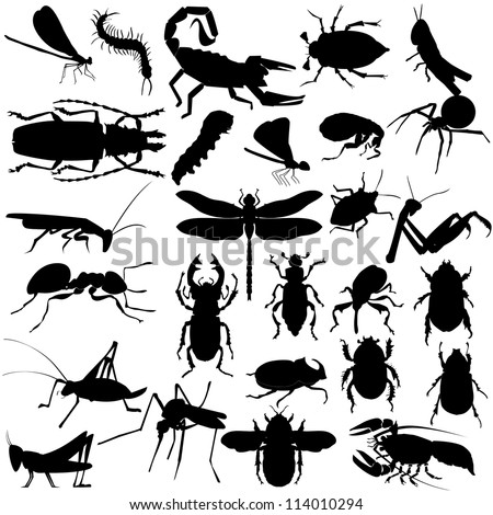 Big set of different insects and spiders - stock vector